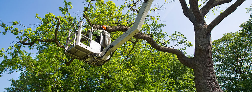 Learn More About Twin Oaks Tree Service By Calling 864 844 2112 We Offer Free Estimates